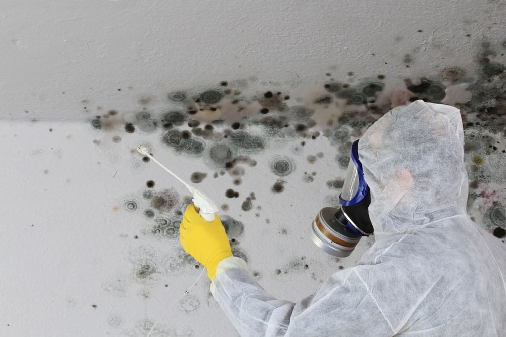 Mold removal Houston
